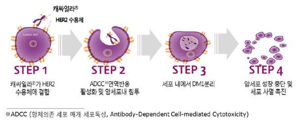 유방암 최초의 ADC 캐싸일라 작용기전