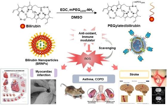 페길화 빌리루빈 나노입자 및 다양한 난치성 염증질환들에 치료제로서의 응용