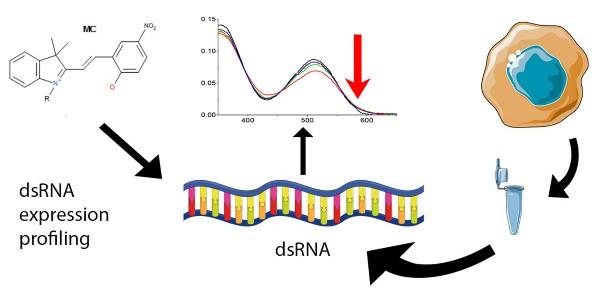 흡광도 변화를 이용한 dsRNA 발현 측정 기술