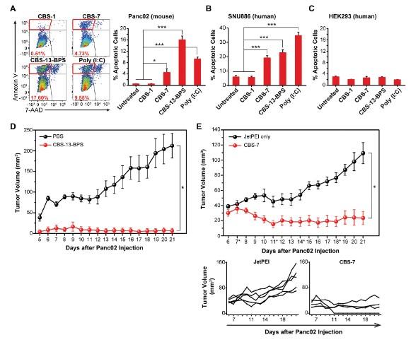 암세포 선택적 자가사별 유도 및 in vivo 종양억제, 항암백신 효과 등