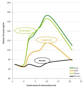 그림6. LalminⓇ SE의 생체이용률