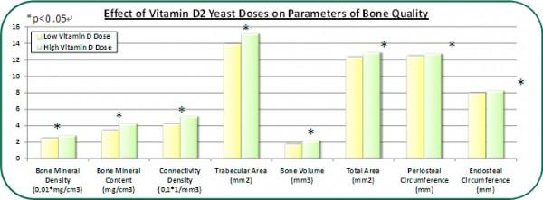 그림7. 비타민D 효모를 7주간 섭취한 쥐의 뼈의 상태 변화