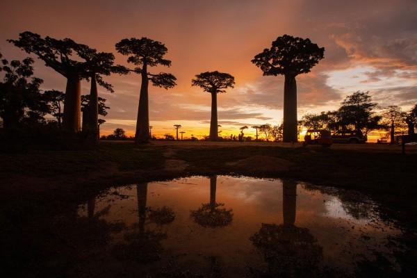 바오밥 일출, 무른다바, 마다가스카르